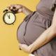 evolución del embarazo