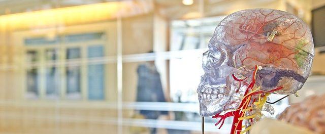 craneo transparente de plastico para investigación